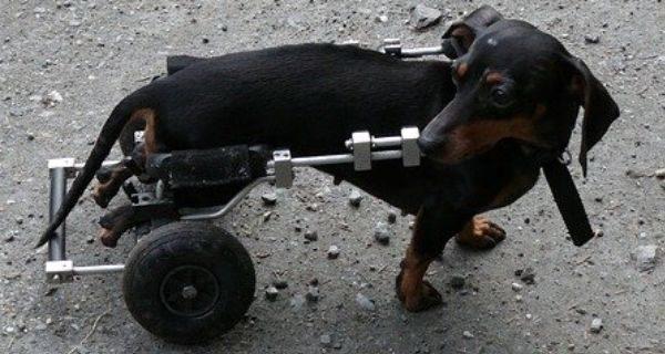 chien-readaptation